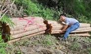 Yêu câu làm rõ vụ rừng bị triệt hạ ở khu vực biên giới