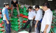 Phát hiện hơn 4 tấn lúa giống nhái thương hiệu ST 24
