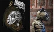 Sự thật sốc về xác ướp thiêng không phải con người trong mộ cổ Ai Cập