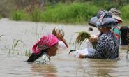 Dự án hồ thủy lợi ngàn tỉ gây nhiều hệ lụy