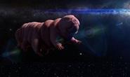 Bí ẩn sinh vật bất tử sống tốt ở hành tinh khác, có thể lai với con người