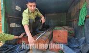 Lâm tặc lái xe chở gỗ vi phạm tông thẳng lực lượng kiểm lâm