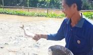 Ngắm đàn cá tự nhiên hàng ngàn con kéo đến trước nhà dân ăn nhờ ở đậu.
