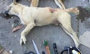Bình Định: Một người đàn ông tử vong sau khi phát hiện bất tỉnh bên cạnh vật dụng trộm chó