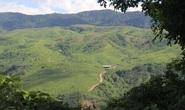 Đang trồng cây trên đồi, một công nhân bị sét đánh tử vong