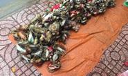 Thực hư cua Cà Mau 50.000 đồng/3 con bán đầy đường, bao ăn