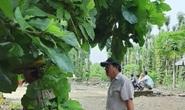 Phát hiện thi thể trong vườn tiêu ở Đồng Nai