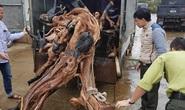 Ngăn chặn thú chơi phá rừng