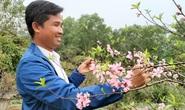 CLIP: Hoa đào nở thắm thủ phủ đào phai lớn nhất xứ Thanh