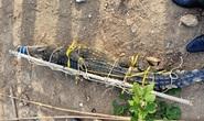 Vũng Tàu giăng lưới bắt được cá sấu dài 2 m ở hồ nước