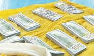 CLIP: Công an An Giang mật phục phá chuyên án vận chuyển 86.200 USD