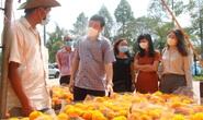 Chủ tịch tỉnh Đồng Tháp kêu gọi mua hoa kiểng ủng hộ người dân