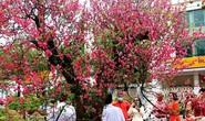 Bài dự thi Làm báo cùng Báo Người Lao Động: Tết hoa
