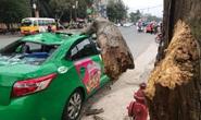 Nam tài xế và khách thoát chết hi hữu khi bị cây xanh gãy đè bẹp xe taxi