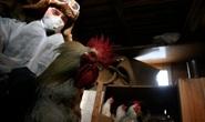 Nga phát hiện loại cúm mới lây từ động vật sang người - H5N8