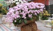 Những chậu hoa lan bằng gỗ lạ mắt ở chợ Tết