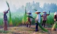 CLIP: Ngỡ ngàng làng chiếu trăm năm được UNESCO vinh danh