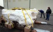 Khối đá nuốt chửng và niêm phong 20 quái thú suốt 136 triệu năm