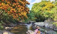 Hoa trang rừng phủ kín suối Tà Má