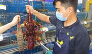 Tôm hùm, nho Úc giá rẻ đổ bộ Việt Nam