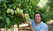 Đến năm 2030, cả nước có 140.000 ha trồng xoài