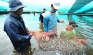 Việt Nam có thể trở thành cường quốc sản xuất, chế biến tôm số 1 thế giới