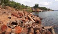 CLIP: Lợi dụng các đảo lòng hồ thủy điện để tập kết gỗ lậu?