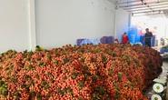 Bộ Ngoại giao thông tin về việc 164 thương gia Trung Quốc vào Việt Nam thu mua vải thiều