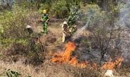 Quảng Nam: Nắng nóng, rừng thông bốc cháy dữ dội