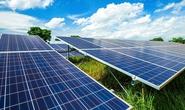 Pin mặt trời Việt Nam bị Ấn Độ điều tra chống bán phá giá