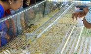 Giá vàng hôm nay 22-5: Hút mạnh dòng tiền, giá vàng cứ thế mà tăng