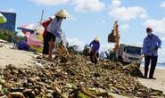 Bãi biển Vũng Tàu lại bị rác tấn công