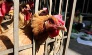 Trung Quốc phát hiện người đầu tiên nhiễm virus cúm gia cầm H10N3
