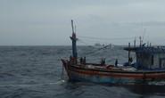 Lên nóc cabin tàu cá phơi mực, một ngư dân rơi xuống biển mất tích