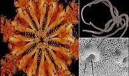 Phát hiện loài quái vật kỷ Jura 8 hàm răng, còn sống đến ngày nay
