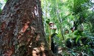 Việt Nam thí điểm bán tín chỉ carbon rừng