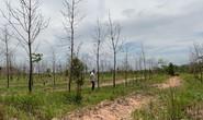 Bảo vệ rừng bị truy tố vì để rừng bị hủy hoại
