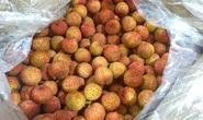 Chợ mạng đừng đua bán trái cây tươi!
