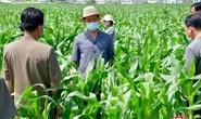 Triều Tiên thừa nhận thiếu lương thực trầm trọng