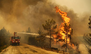 Cháy rừng hoành hành ở nhiều nước