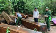 Ngược đời lâm tặc tố kiểm lâm... tiếp tay phá rừng: Truy tố 5 người