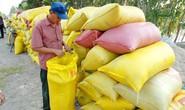 Kiến nghị tiếp tục bơm vốn, giảm lãi suất để thu mua thóc gạo tại ĐBSCL