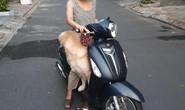 """Đà Nẵng: Dắt chó đi dạo khi đang """"ai ở đâu thì ở đó, nhiều người bị đề xuất xử phạt"""