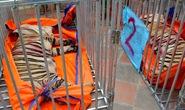 Vụ phát hiện 17 con hổ lớn trong khu dân cư: 8 con hổ đã chết