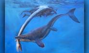 Quái vật miệng dài từng cai trị đại dương cổ đại