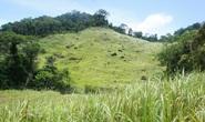 UNESCO công nhận Núi Chúa và Cao nguyên Kon Hà Nừng là Khu dự trữ sinh quyển thế giới