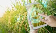 Nông nghiệp chuyển đổi số để thích nghi