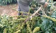 CLIP: Côn đồ liên tục chặt phá cây trồng, đập phá tài sản người dân