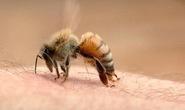 Nữ du khách Hàn Quốc bị ong đốt chết tại Đà Nẵng