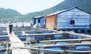 Chuyên gia Trung Quốc nuôi cá trái phép